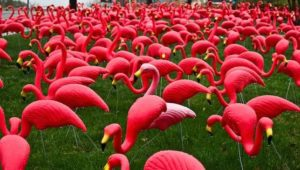 PinkFlamingos.jpg.653x0_q80_crop-smart